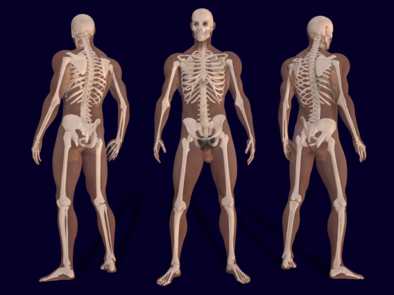 3D_Male_Skeleton_Anatomy